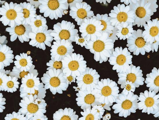 Para florescer na primavera