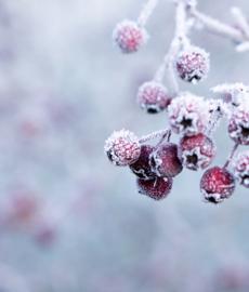 Inverno nostálgico